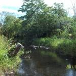 Rennie's River on Elizabeth Avenue